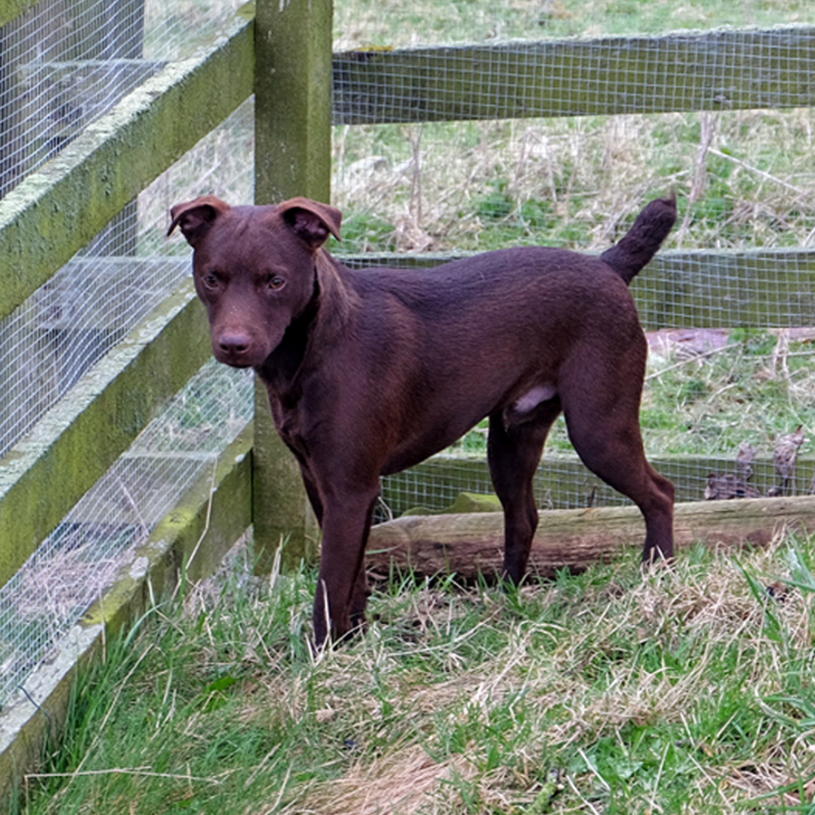 Maximus The Patterdale